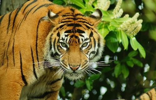 虎の画像 p1_39