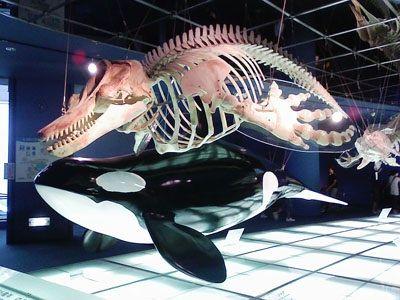 orcabone