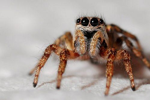 1684449636-spider-564685_1920-48Pg-640x426-MM-100