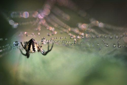 2676907818-spider-595301_1920-G7J-640x426-MM-100
