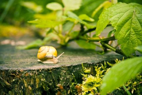 1963323152-snail-621197-nZYE-480x320-MM-100 (1)