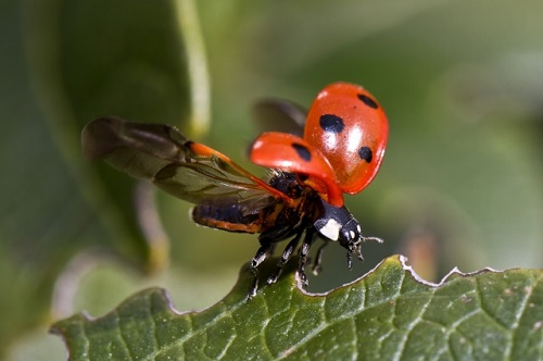 1230064549-ladybug-743562-M8RB-640x426-MM-100