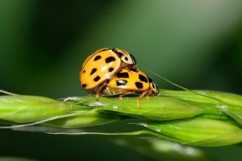 930115170-ladybug-752658_1920-Wzx-640x426-MM-100