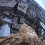 鷹の寿命ってどれくらい?