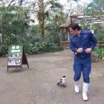 ペンギンの寿命ってどれくらい?