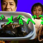 「タガメ」の食用ってどうなの?
