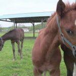 馬の寿命ってどれくらい?