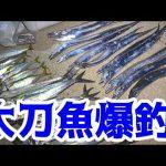 「太刀魚」の旬の時期と美味しい食べ方