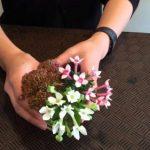 ブバルディアってどんな花が咲くの?