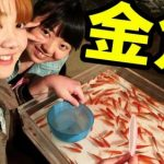金魚すくいの金魚の寿命ってどれくらい?