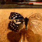 蛾の鱗粉って毒や害はある?