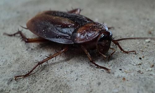対策 ベランダ ゴキブリ