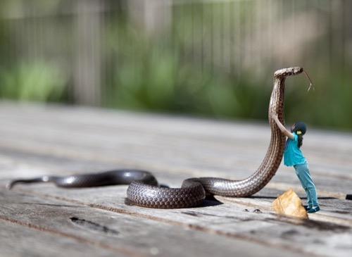 蛇の大きさギネス記録は?
